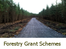Current Forestry Grant Schemes