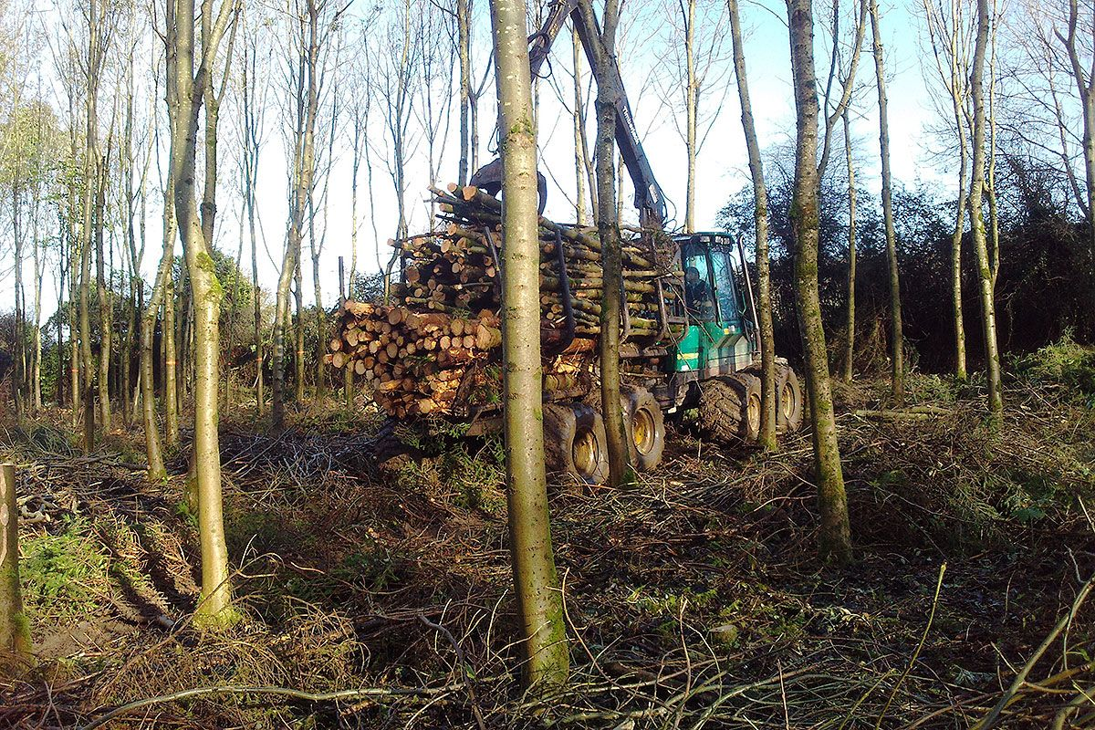 tractor-transporting-logs