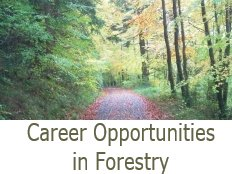 Career Opportunities in Forestry