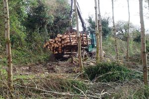 tractor-transporting-logs1
