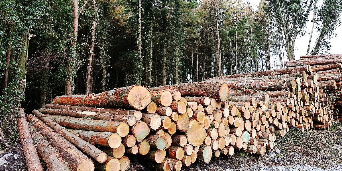 EU Timber Regulation (EUTR)