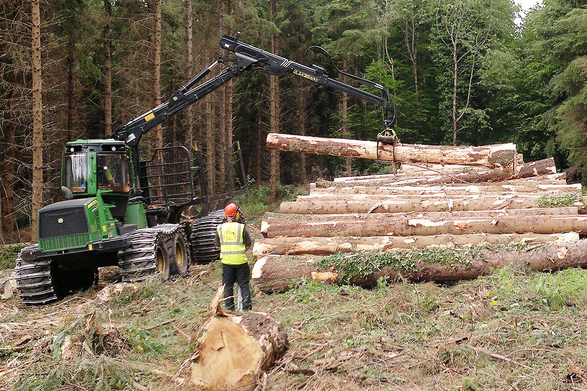 Logging operation in action