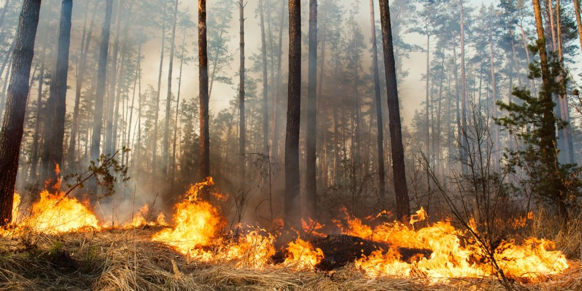 Reducing the risk of Forest Fire